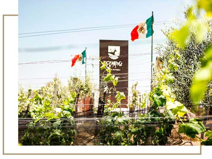 Camino-de-Vinos-Viñedo-intro-2